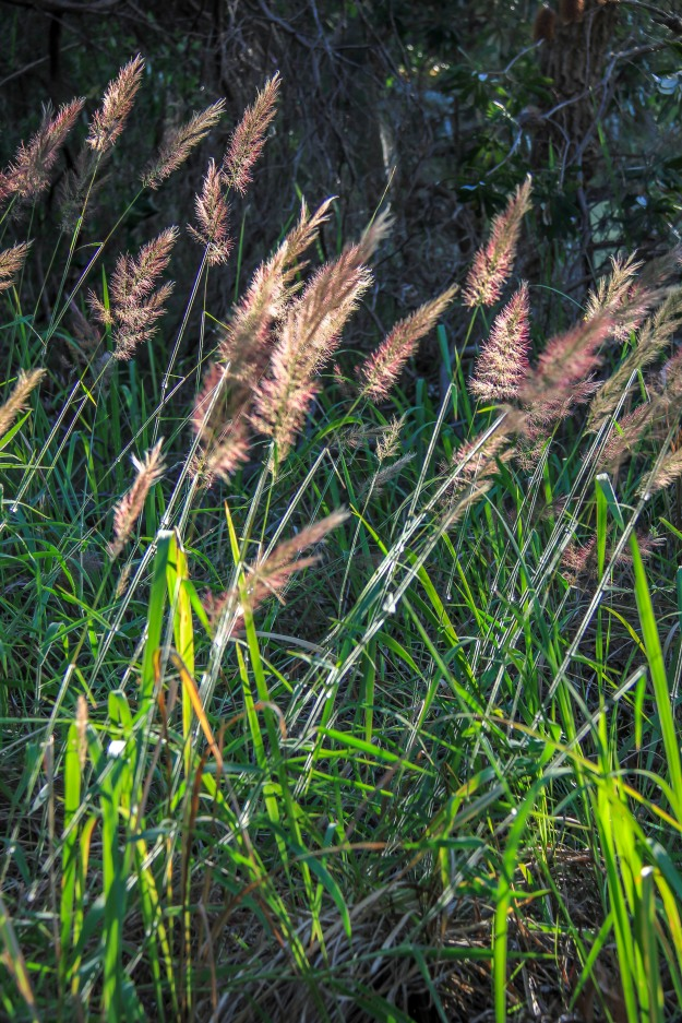 Pretty grass in the afternoon