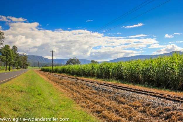 Cane fields with mountains in the background