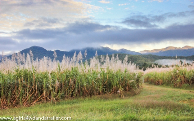 The cane fields with mountains in the background at Mossman